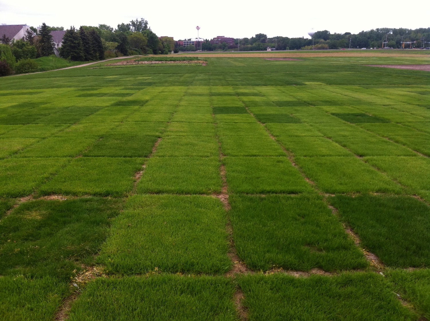 low input turf research plots