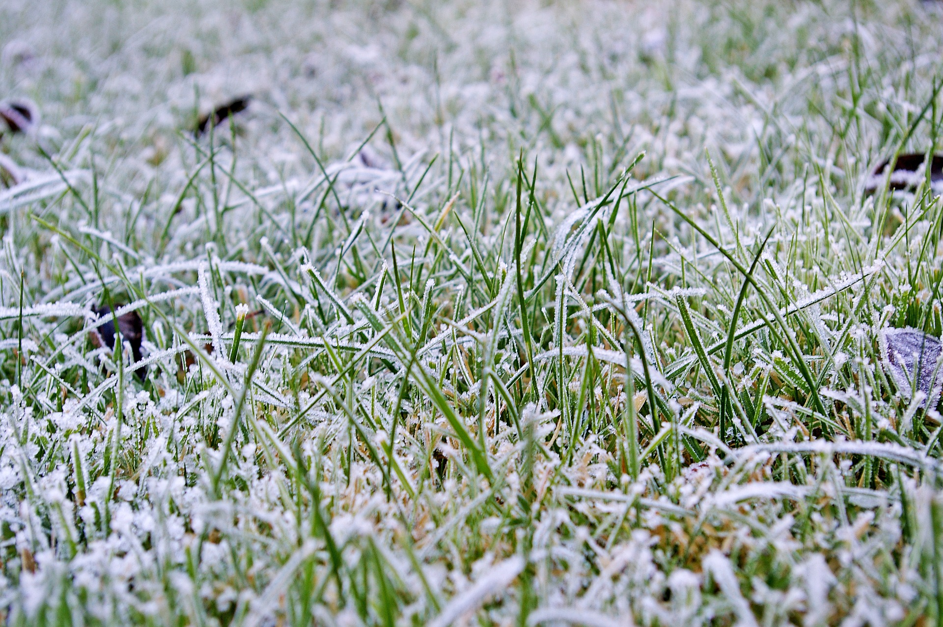 lawn with frost