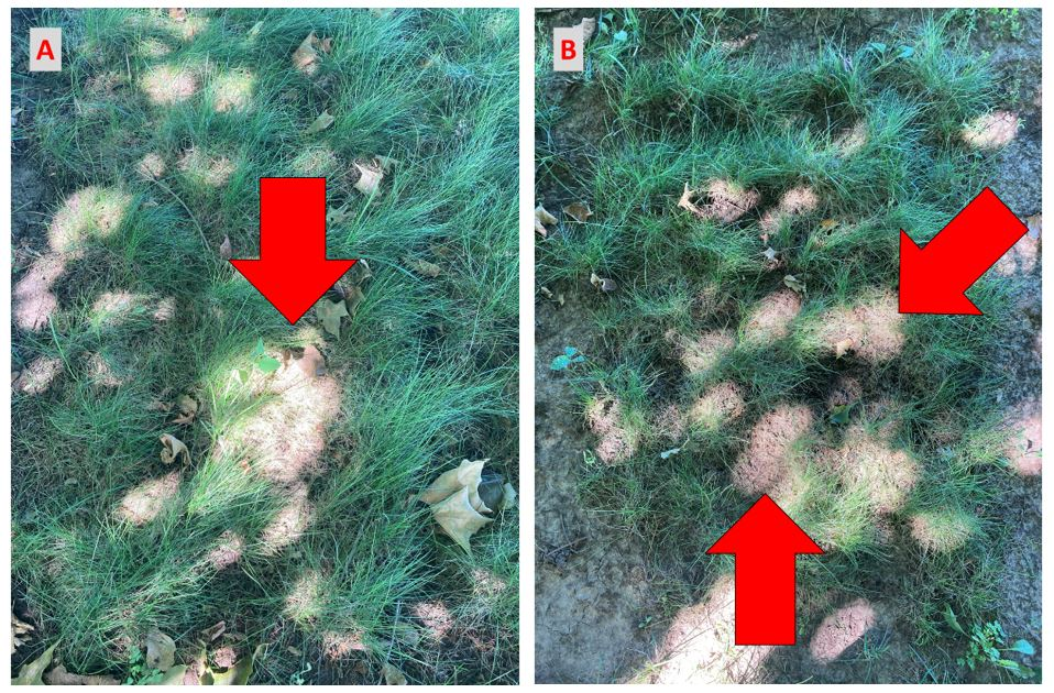Dead areas in sunflecked turf