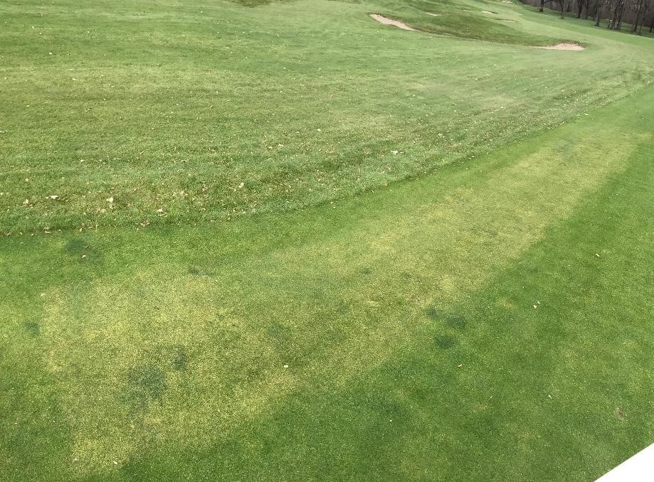 Damaged turf on a golf course