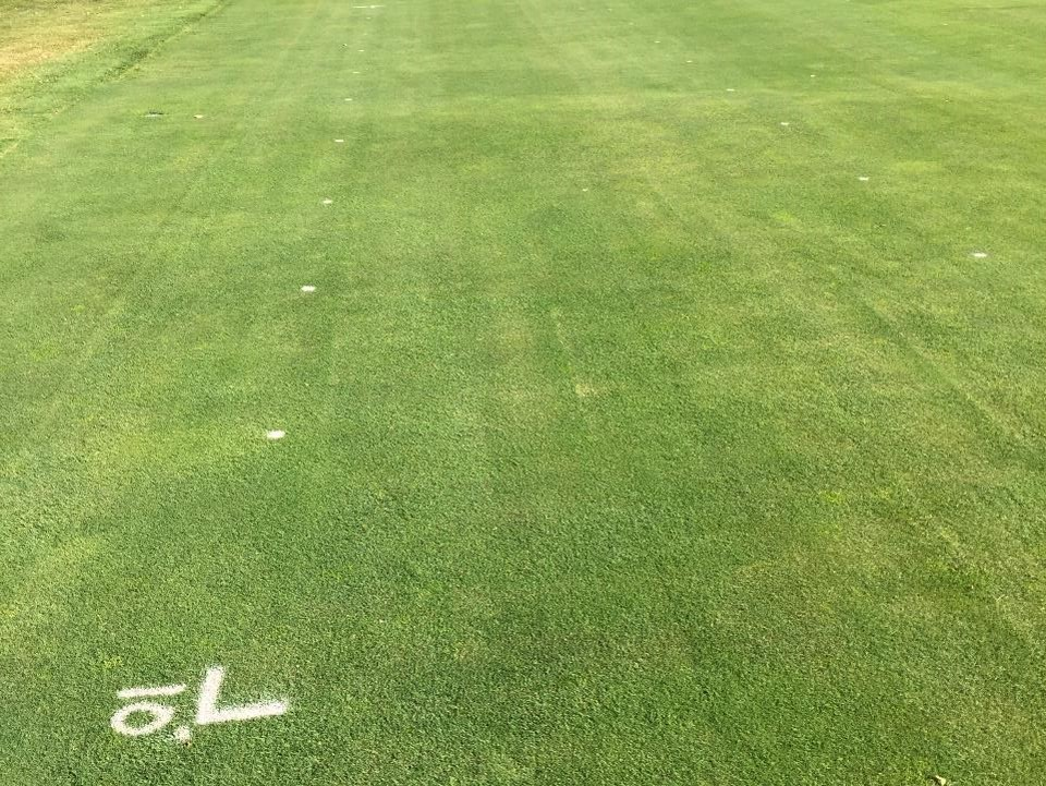 Turf plots on a golf course with a similiar appearance