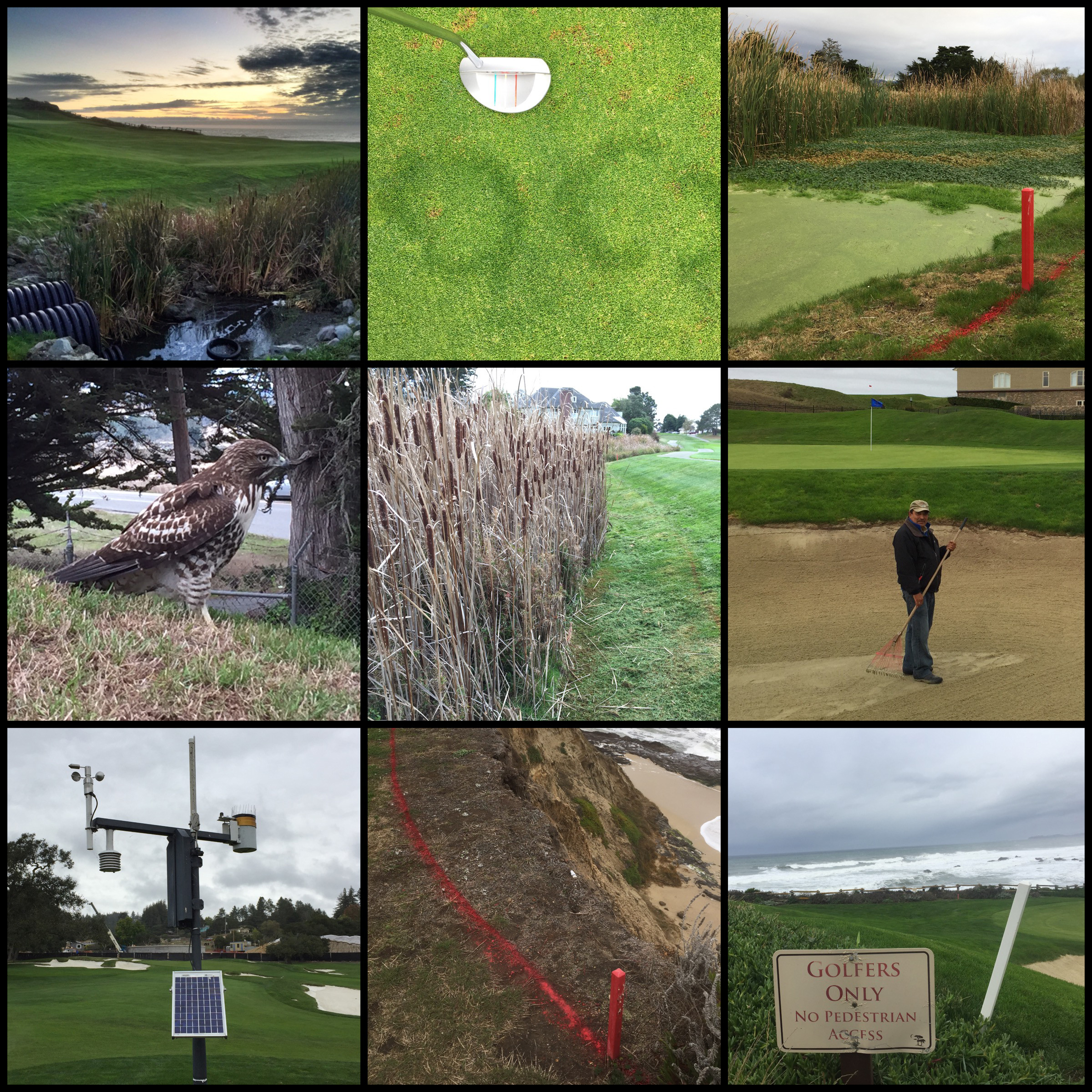 images demonstrating the sustainability of golf