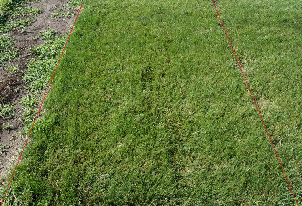 Seeding Your Lawn This Fall Here Are Some Considerations Part 2 Of 2 Turfgrass Science