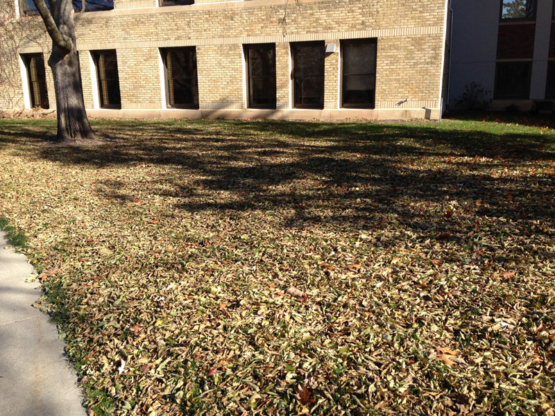 many leaves on lawn